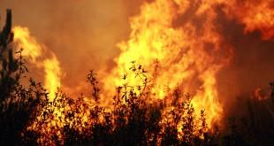 PJ deteve presumível incendiário de Resende