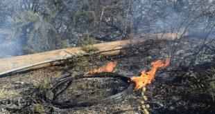 Incêndio florestal em Mangualde
