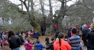 Mais antigo Castanheiro de Portugal abraçado no Dia Mundial da Árvore
