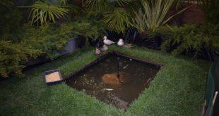 4º Expo Jardim e animais de Sernancelhe