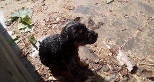 Cão bebé resgatado com vida do fundo de um poço