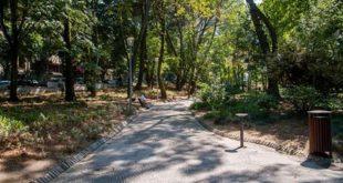 Câmara de Viseu abate árvores em risco no Parque Aquilino Ribeiro
