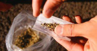 Jovem de 20 anos detido em Aguiar da Beira na posse de 1284 doses de haxixe