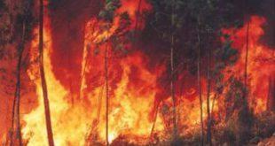 Mangualde: Identificado por incêndio