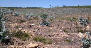 """CDU """"estupefacta"""" com 100 hectares de eucaliptos na Póvoa de Mundão"""