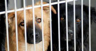 BE lamenta chumbo das verbas para a esterilização de animais abandonados em Viseu