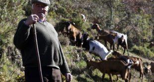 """Incêndios: """"Cabras sapadoras"""" na limpeza da floresta"""