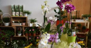 Sernancelhe: Expo Jardim e Animais este fim-de-semana