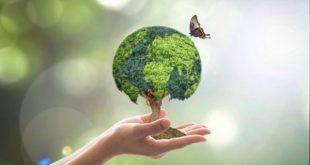 Vila Nova de Paiva lança semente em balões no dia mundial da árvore