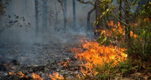 Detido por queimada: Tribunal aplica pagamento de 400 euros aos bombeiros