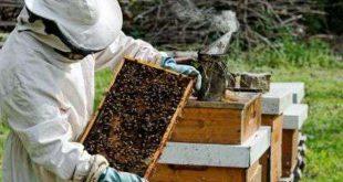 Pesticidas: Apicultores do Caramulo preocupados com a produção de mel