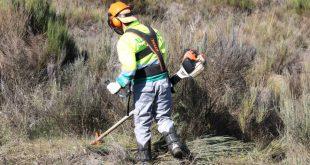 Autarca de Viseu avança com limpeza das bermas na EN 229 e IP5