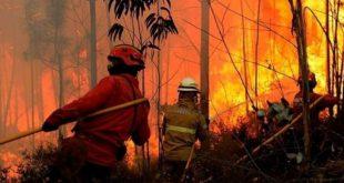 Eliminação de ninho de vespas foi a causa de um incêndio florestal em S.P. Sul