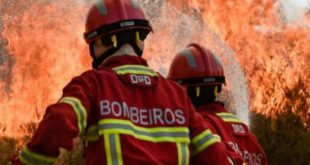 Viseu: PJ identifica menor suspeito de atear um incêndio florestal