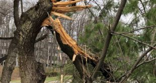 Câmara de Viseu corta árvores na circunvalação depois do furacão Leslie