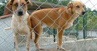 Cinfães vai construir centro de recolha de animais