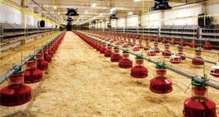 Mangualde: Moradores promovem abaixo-assinado contra construção de aviário