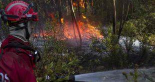 Queima de sobrantes agrícolas na causa de um incêndio florestal em Vouzela