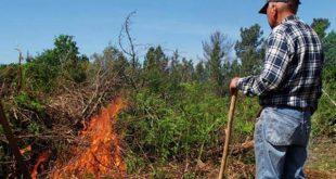 Incêndio florestal em Penedono com origem em queima de sobrantes