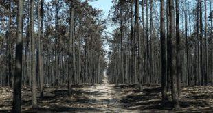 Investigadores iniciam projeto em Mortágua para reabilitar áreas ardidas