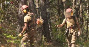 Câmara de Viseu com dificuldades em contratar empresas para limpeza e gestão florestal