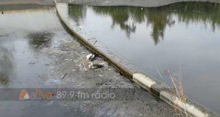 Viseu: fenda no açude junto à Casa da Ribeira baixa o nível de água e provoca a morte de vários peixes