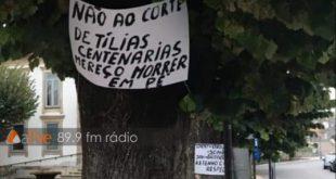 Vila Nova de Paiva: autarca garante que abate de árvores só avança caso esteja em causa a segurança pública