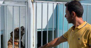 Mangualde: empresa privada investe 200 mil euros em hotel canino
