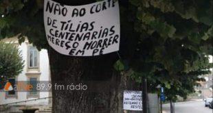Em Vila Nova de Paiva abate das tílias suspenso