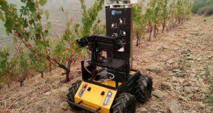 robot Romovi vai monitorizar vinhas das encostas do Douro
