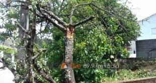 Sátão: raio atingiu árvore de fruto