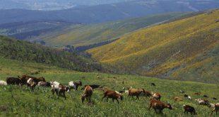 Câmara de Cinfães apoia criadores de gado