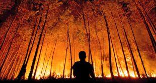 Câmara de Viseu aprova plano municipal de defesa da floresta