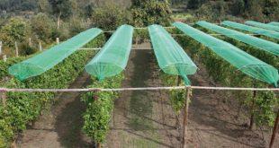 Autarca de Moimenta da Beira defende estruturas para proteger pomares