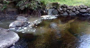 Poluição do Rio Paiva – José Morgado – Presidente do Município de Vila Nova de Paiva respondeu.