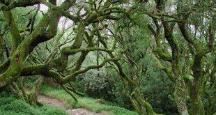 Rota do Bussaco, liga os concelhos da Mealhada, Mortágua e Penacova