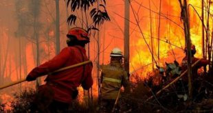 GNR identificou homem por incêndio rural em Tarouca