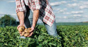 Agricultores de Vouzela podem concorrer a apoio de 2,4 ME para conservação do solo