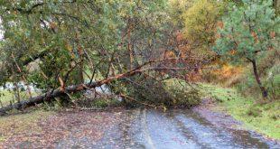 V.N.Paiva – Mau tempo provocou queda de árvores