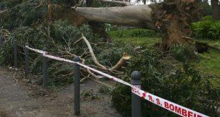Vento fez derrubar árvores, em Viseu houve mais de 60 ocorrências