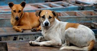 Concelho de Viseu vai ter centro de recolha para animais errantes