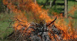 Viseu entre os distritos que mais autorizações solicitou para queimas e queimadas