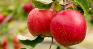 """Feira da Maçã em Armamar com  """"mais e melhor"""" fruta este ano"""
